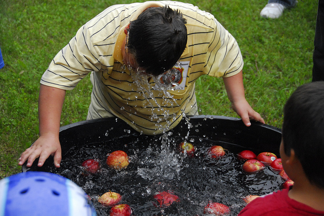 Ah the raw thrill of completely soaking one's trunk in pursuit of a crispy apple bobbing in pathogenic brine. Photo courtesy of flickr Creative Commons user Rob Swystun.