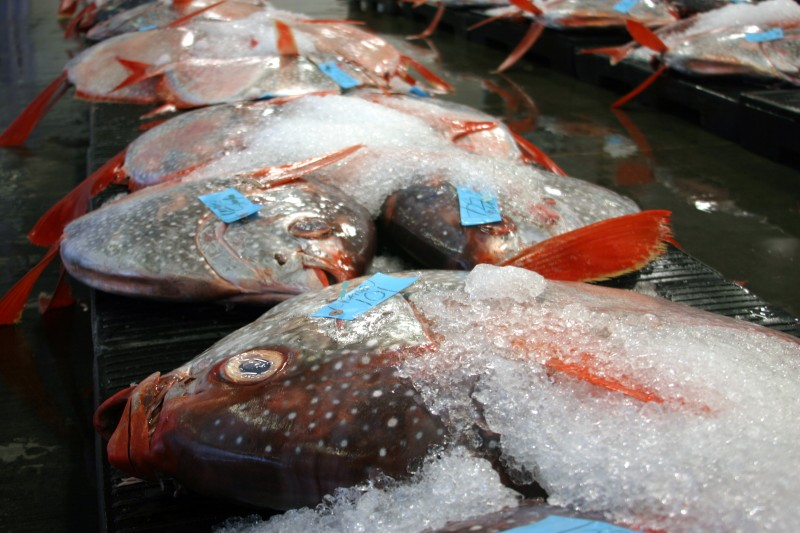 A fish auction in Hawaii sells  local a local shallow swimmer called moonfish, or Opah. (Photo: C. Anela Choy).