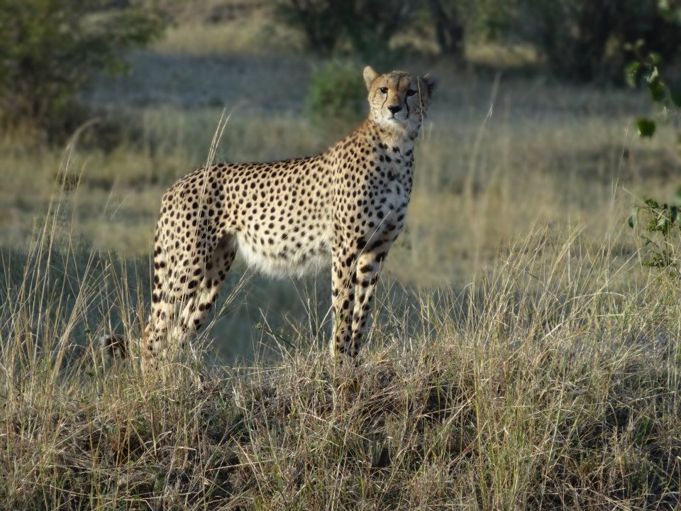 Image taken at Maasai Mara, Kenya by Kasha Patel