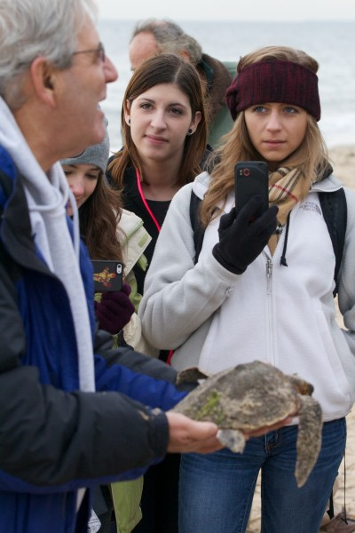 Victoria Snyder, pictured at right, and Amanda Anzalone, pictured center, watch as Don Lewis, pictured at left, handles the turtle they found stranded at the beach.